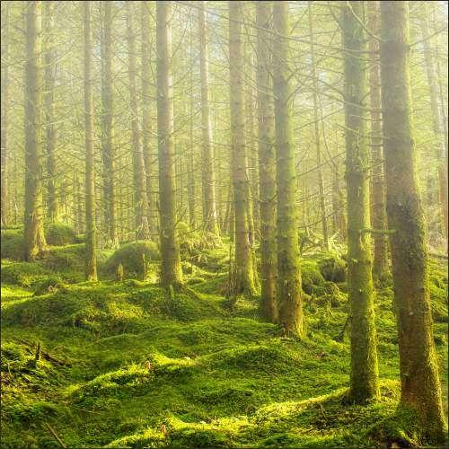 Küchenrückwand Wald 02