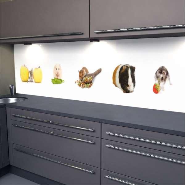 Küchenrückwand süße Nagetiere