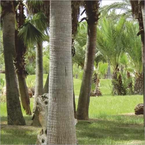 Küchenrückwand Palmen