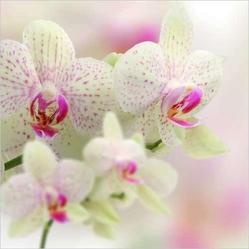 Küchenrückwand weiße Orchideen