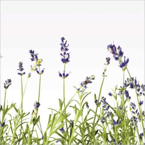Küchenrückwand Lavendel