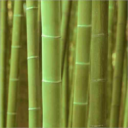Küchenrückwand Bambus