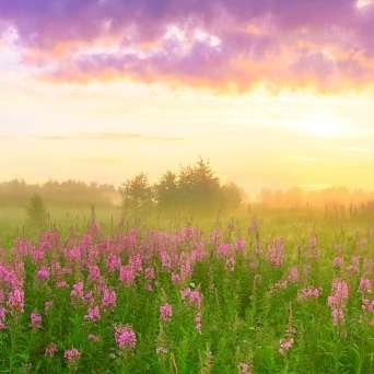 Sonnenutergang auf Blumenwiese