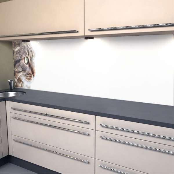 Küchenrückwand Katze