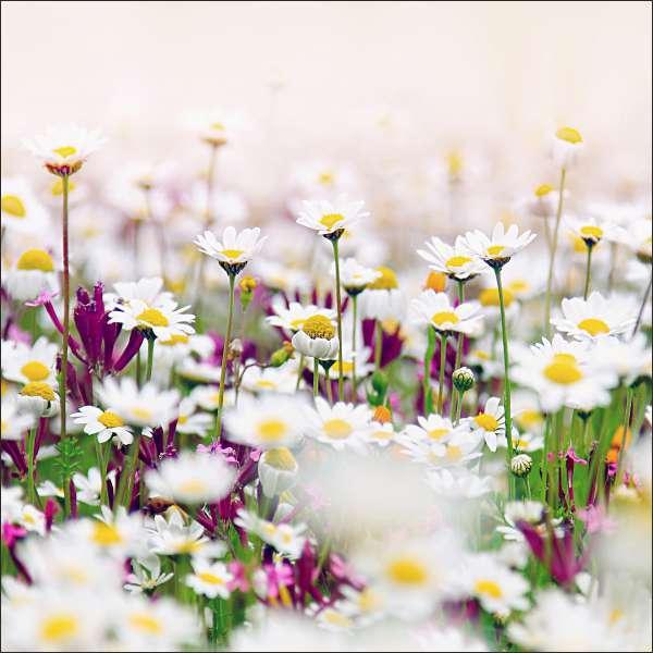 Küchenrückwand Blumenpanorama