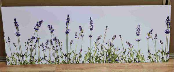 Sonderposten Lavendel